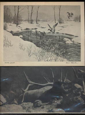 Hans Kleiber WY Winter Guests Prints + WY Elk Photo W/Huge Rack