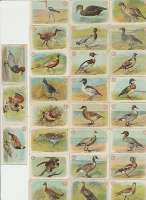 27 Vintage 1904 Church & Co Game Bird Series Advertising Cards
