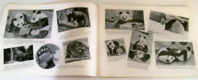 1941 St Louis Zoo Official Photo Guide Book With Map - 80 Pages